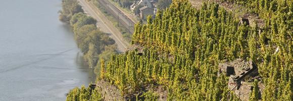 Weinlagen an der Terrassenmosel